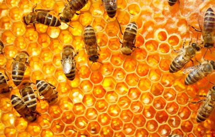 Honey may be a sweet liquid